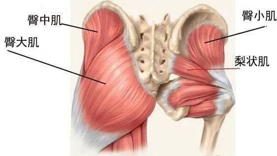 翘臀除了深蹲,启动臀部肌肉才是关键!(收藏级)_换边