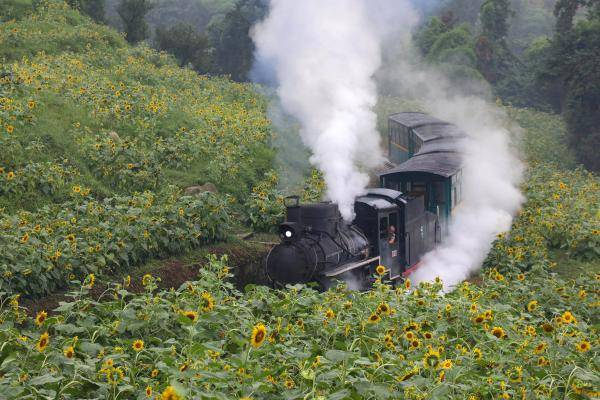 四川嘉阳小火车穿越向日葵花海