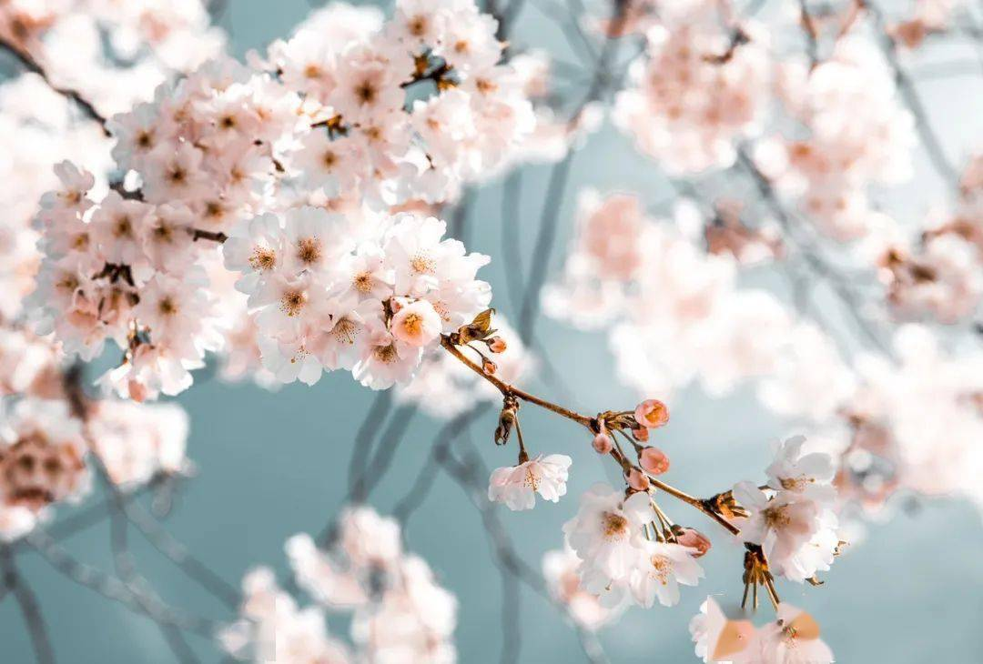 帕特里克 8月10日至8月16日本周星座 爱情运势提醒