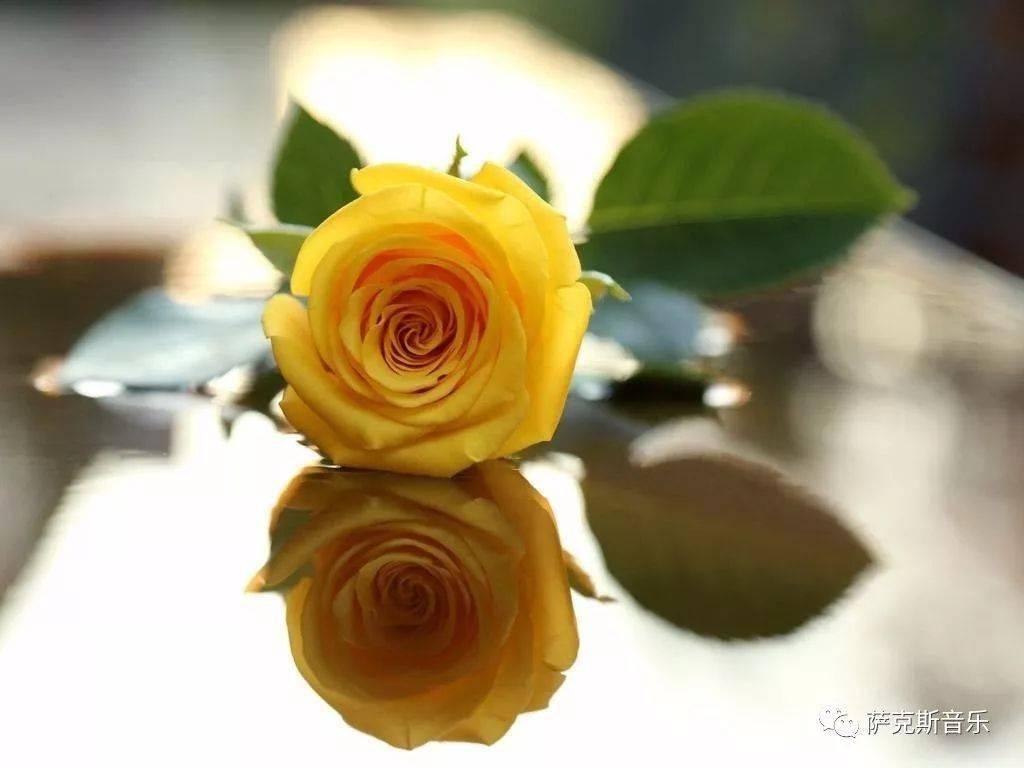 玫瑰手机壁纸高清