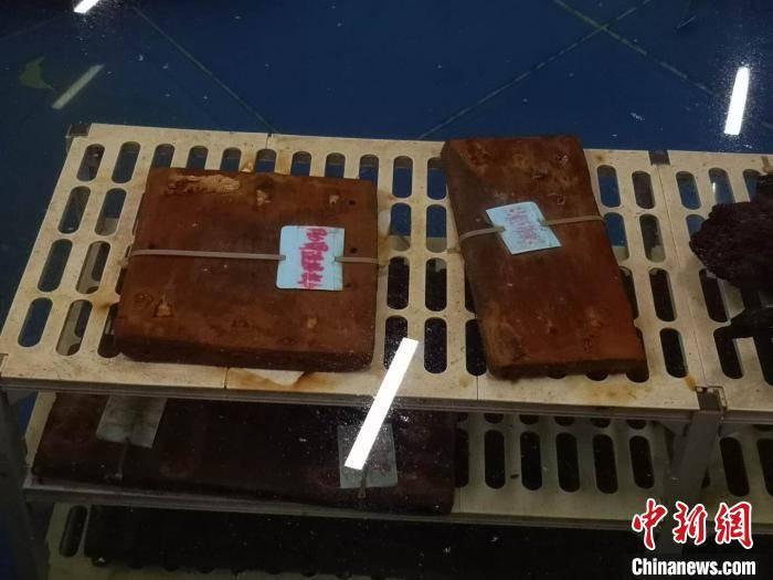 中新网杭州8月15日电 宁波水下考古研究所