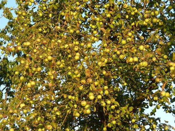 苹果好吃营养价值高,但食用苹果的2点误区,一起来了解