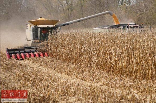 外媒:中国签订一个月来最大单日美国玉米购买合同