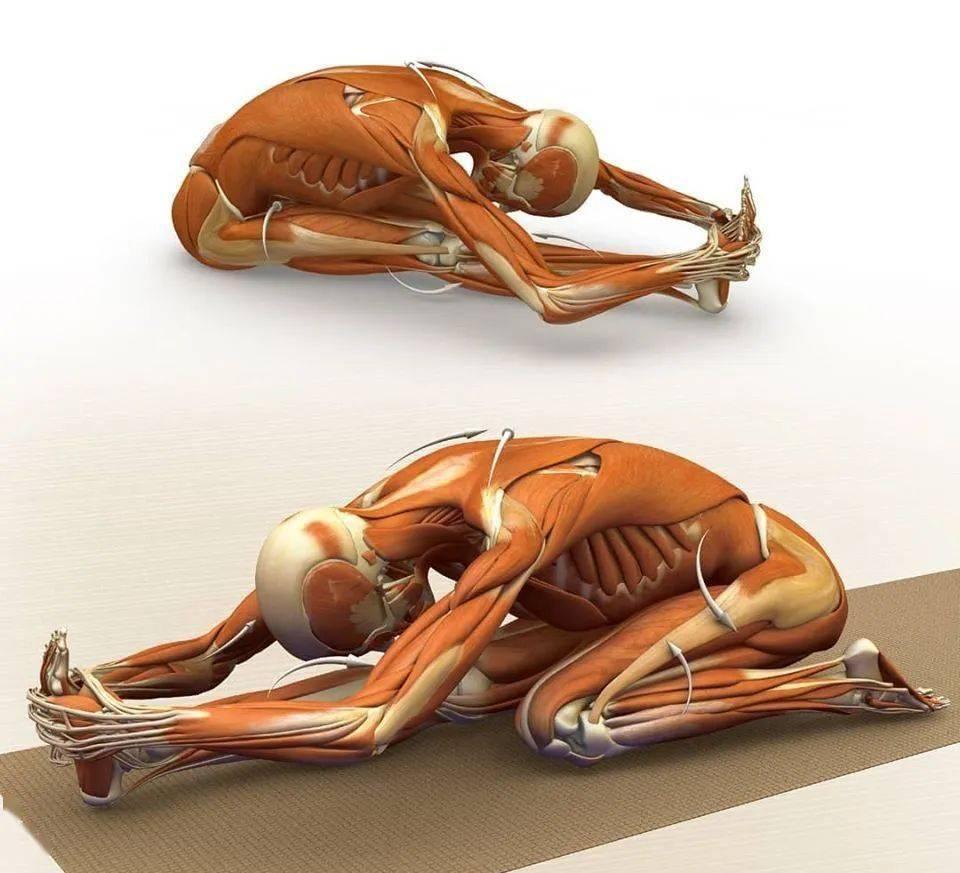 28个常见瑜伽体式解剖图,正位、发力一目了然(收藏级!)_补充
