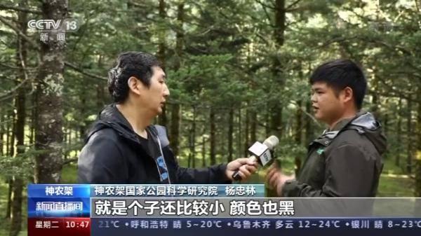 受伤动物如何救助?白化动物为何频被发现?跟随记者探访神农架国家公园
