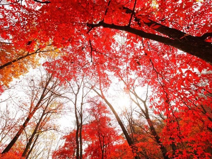 吉林省这些秋景值得游 美食也是杠杠滴