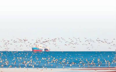 鸟飞到哪里去了