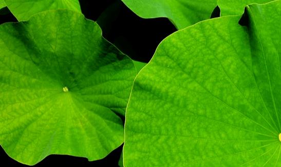 一株植物,十一种药