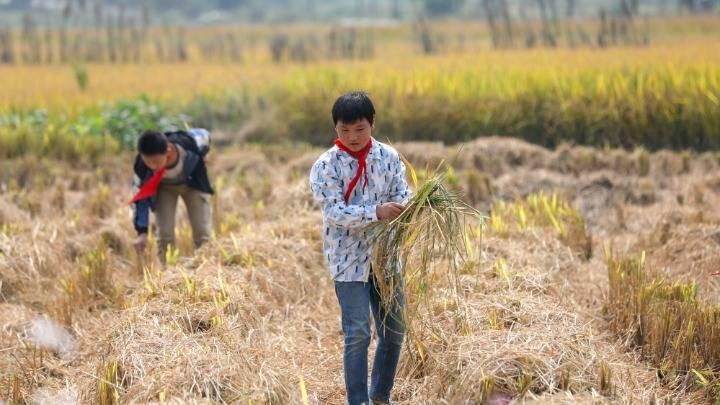 湖南衡阳:节约粮食 远离浪费