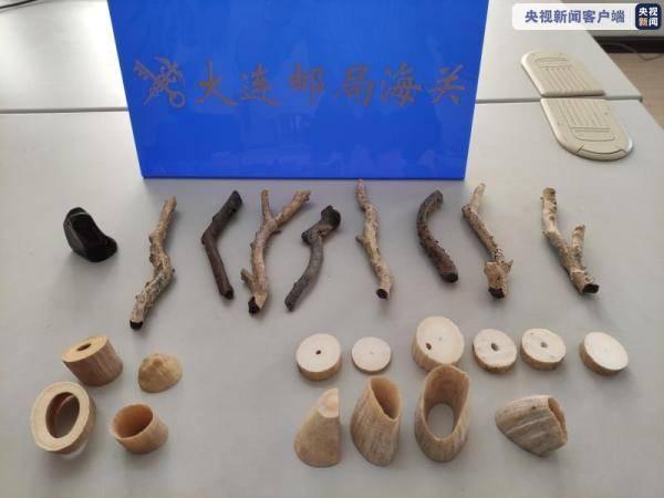 鲸牙、河马牙、黑珊瑚!大连邮局海关查获濒危野生动物制品23件