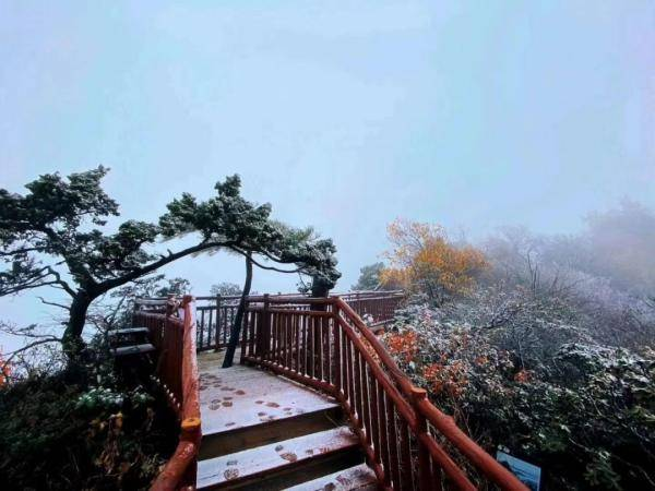 ……光雾山下雪啦!