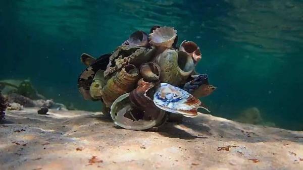 我的章鱼老师-2