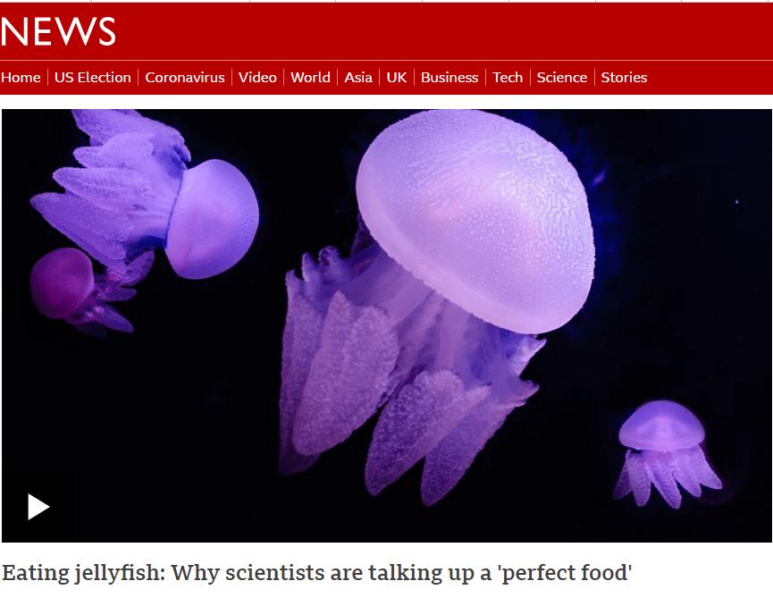 商业捕捞渔获耗竭 科学家:可改吃水母