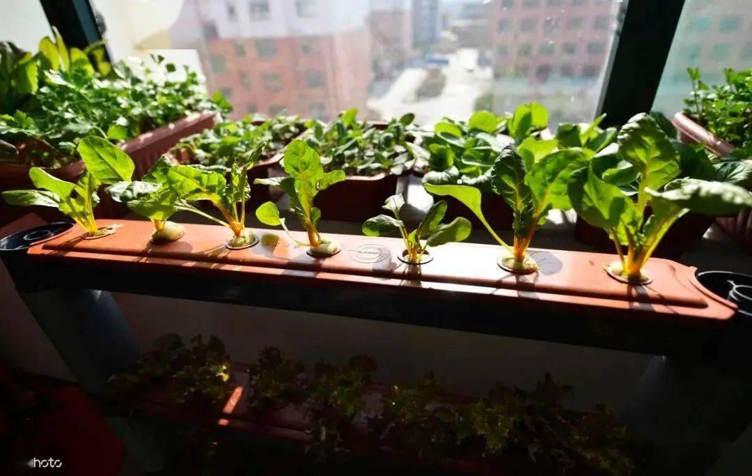 秋分后,阳台种上5盆菜,30天就能炒一盘,比卖的有味