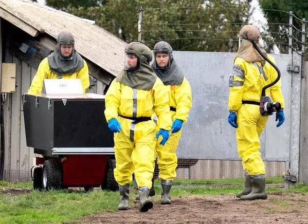 百事3注册丹麦宣布捕杀全国1700万水貂,因发现变异新冠病毒可传人(图2)