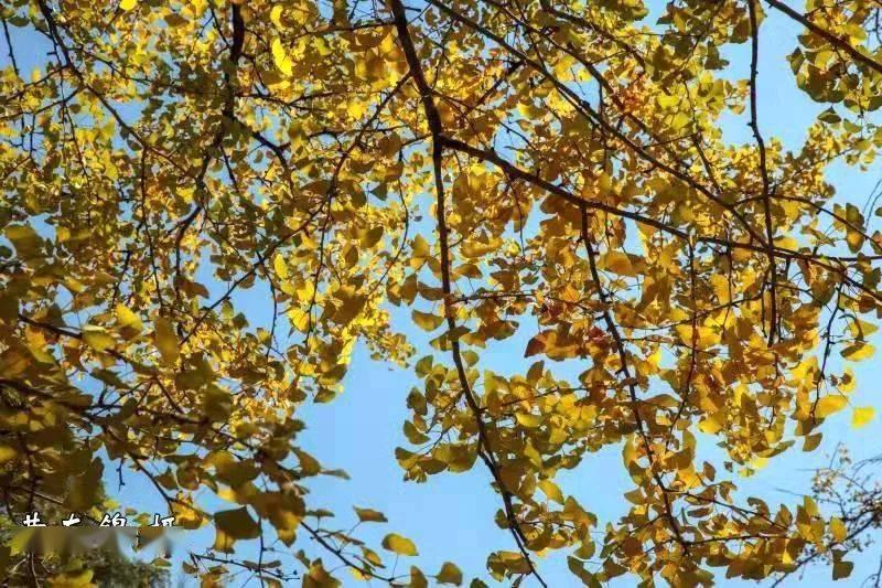 中国绿色首都是最富氧的三明|蓝天,黄叶!龙门
