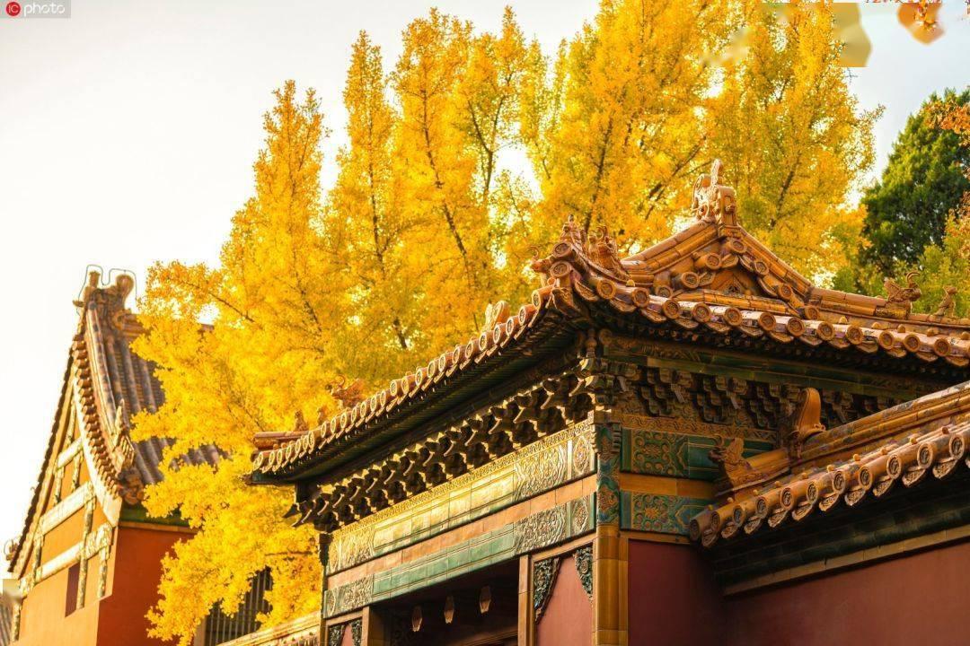 """上新啦!有一种美,叫""""故宫的秋"""""""