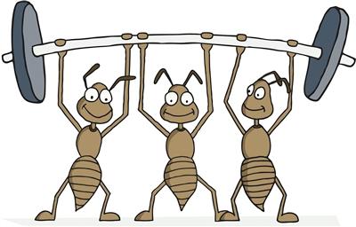 """蚂蚁,地表""""超级社会""""的建造者"""