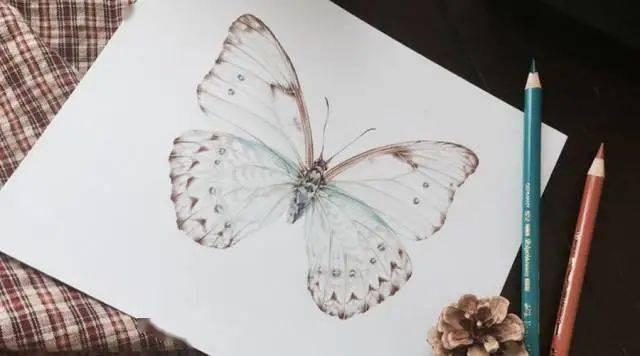 【彩铅手绘教程】蝴蝶画法图文教程