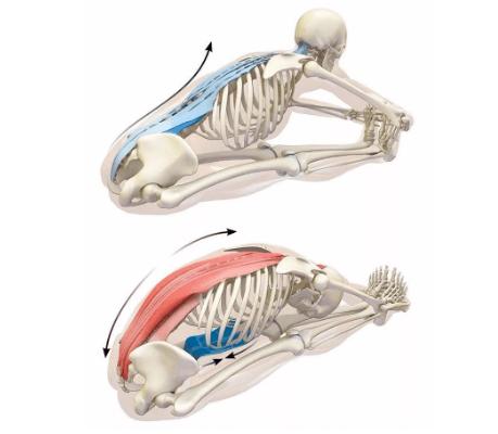 背部僵硬紧张,该如何拉伸放松呢?(收藏级)