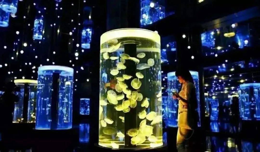 ¥199限时抢上海嘉定鹏新海洋世界亲子年卡!逛海洋馆上瘾的人有救啦!一年有效!