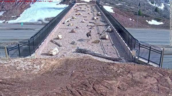 """美国一州为保护野生动物 高速路上建""""动物立交桥"""""""