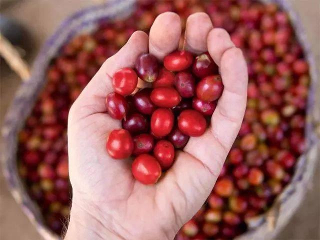 都说是现磨咖啡豆,现磨也不见得就是新鲜的! 博主推荐 第3张
