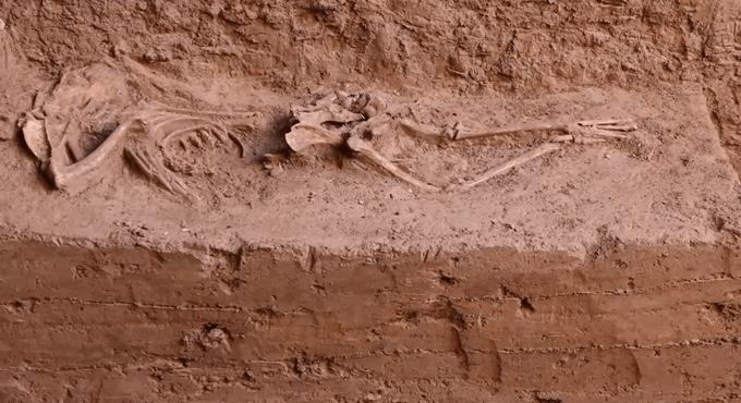 石家庄发现17座商代后期墓葬(图)
