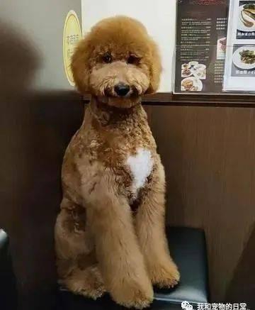 事先告知有小狗,没想到一踏进店里,所有人都愣在原地说不出话!