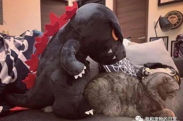 猫咪被巨兽偷亲,下秒整个猫呆掉,奴才直呼:爱情来得太突然!