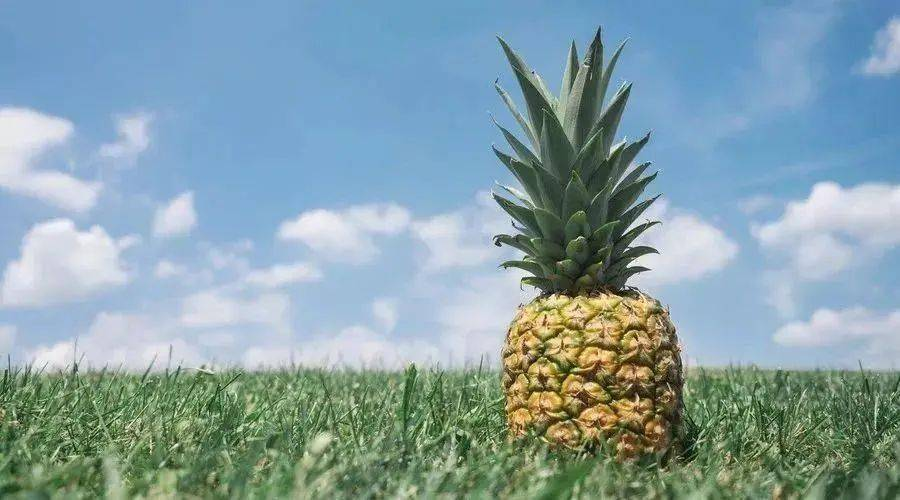 菠萝除了好吃之外,还有这些好处!你知道吗?  第1张