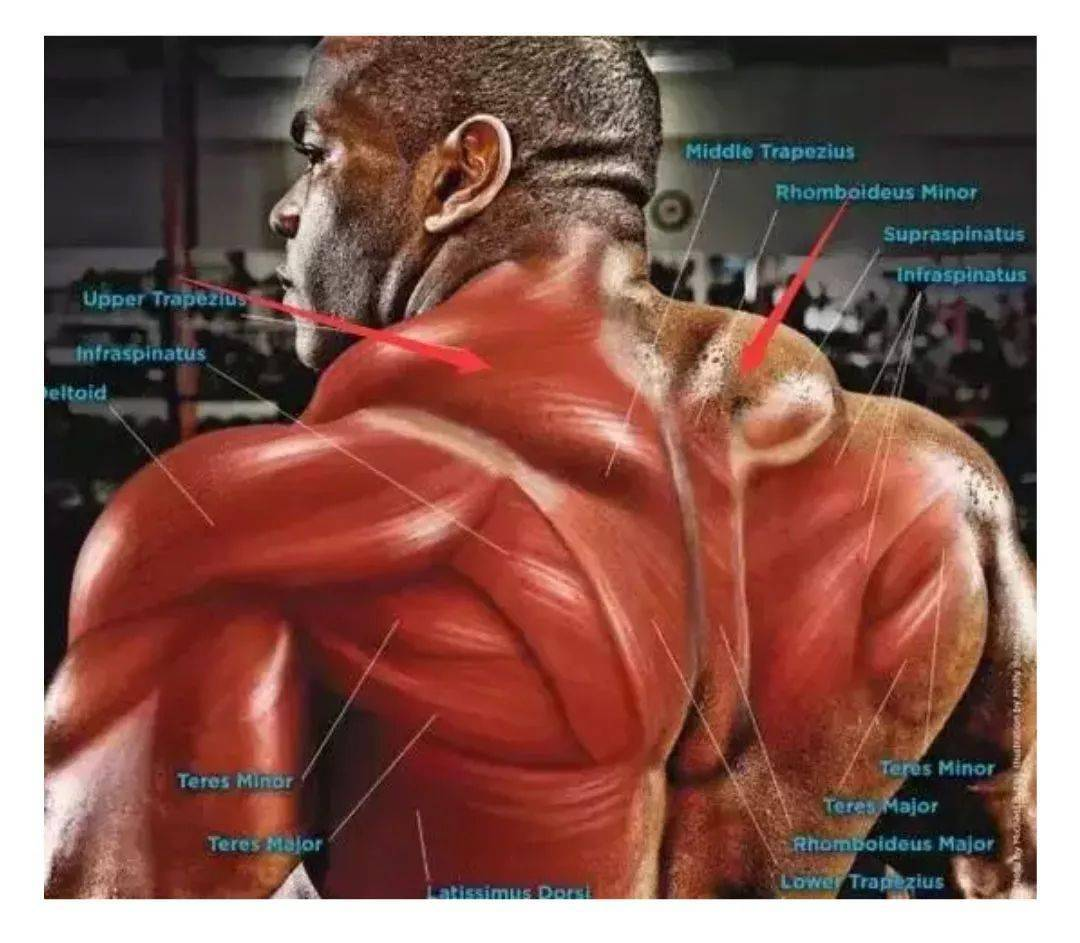 斜方肌锻炼方法详解,男人想要穿衣服好看,必须练!