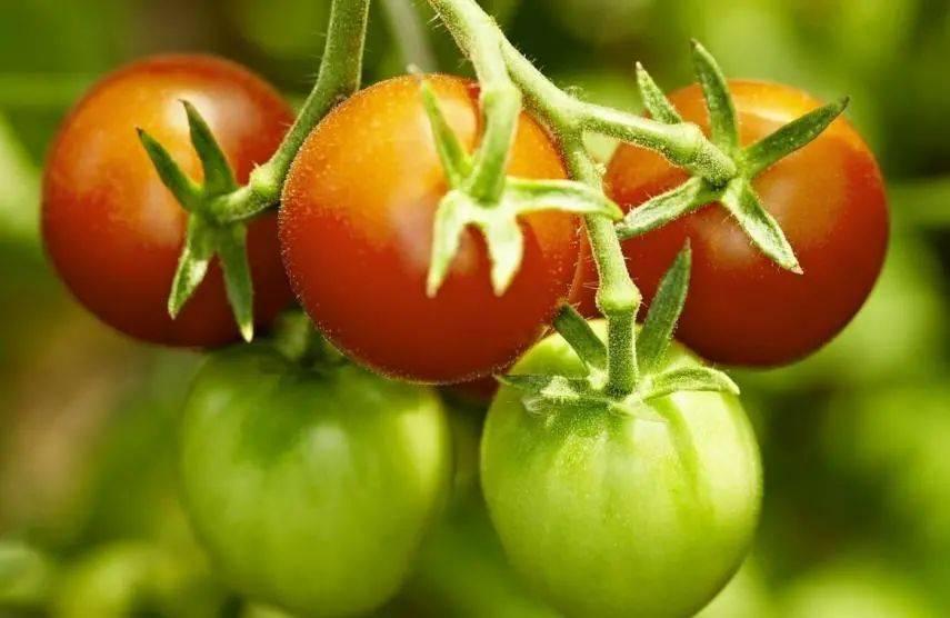 这3种蔬菜会伤肝!大家注意了,日常一定要远离这些菜!