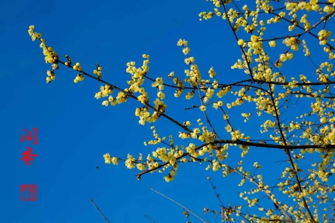 天天都是dong大的太阳 安利一波绝美赏花地!