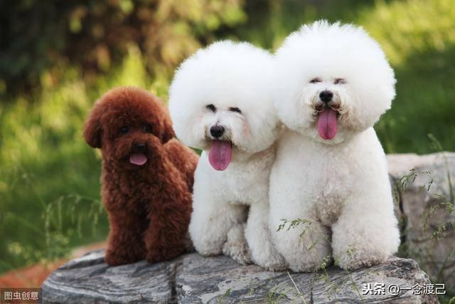 一个宠物美容师的自述(千万不要干宠物美容师)