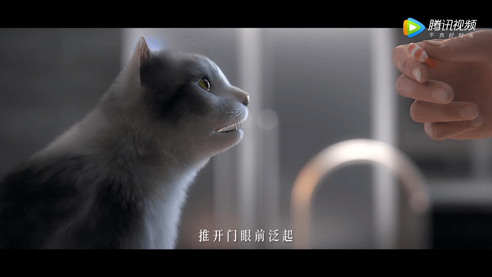 《老板,锅里长猫了》萌宠来袭,小青姐姐教你边撸猫边做菜