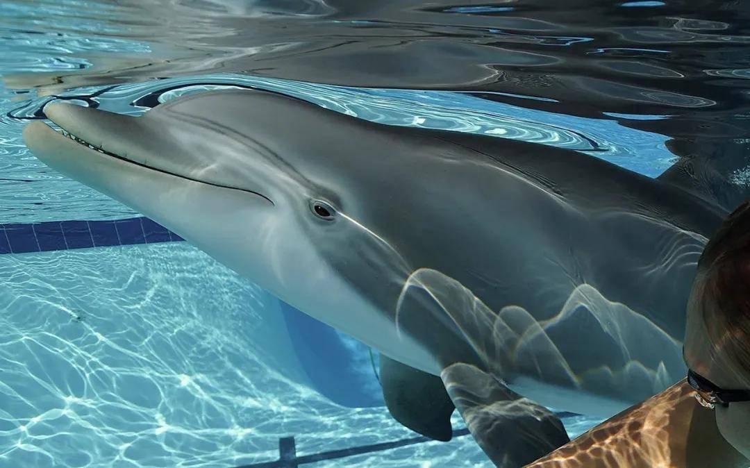 .8亿元一台的机械海豚