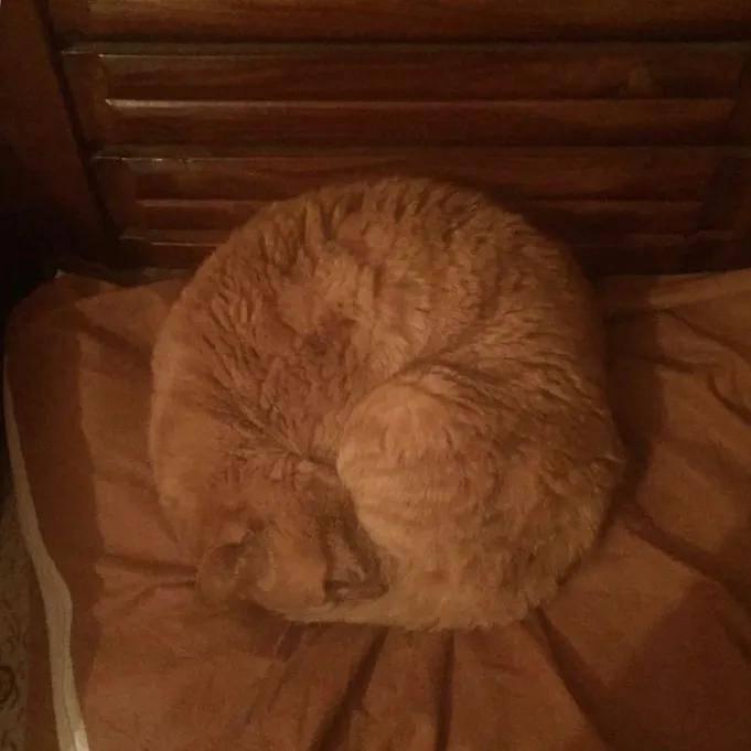 29岁老猫的一个举动,惹哭10万网友