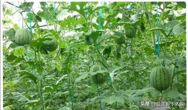 农村种植致富好项目(不愁销路的小型加工厂)
