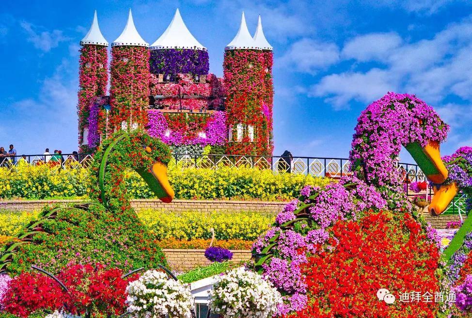 2020-2021迪拜奇迹花园将于11月1日重新开放:开放时