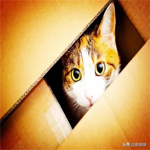 薛定谔是什么梗(薛定谔的猫比喻什么)