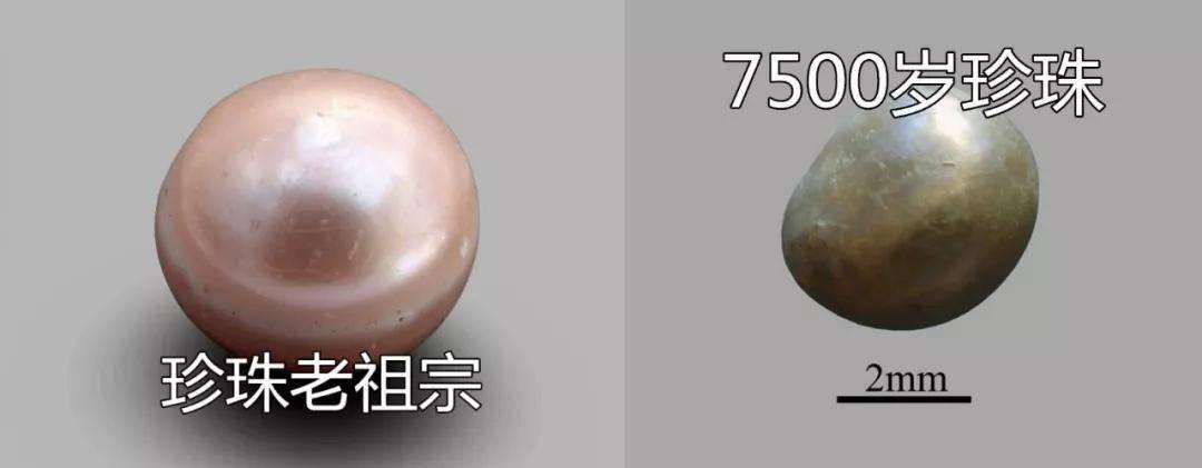 """史上最""""老""""珍珠曝光!8000年了,还光泽如新?这都是因为..."""