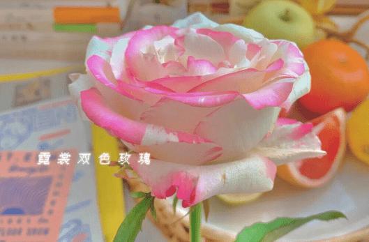 高质量文案句子 网络快讯 第1张
