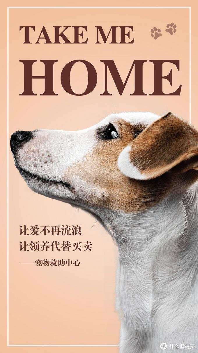 养狗的利润(养狗有什么注意事项)插图(1)