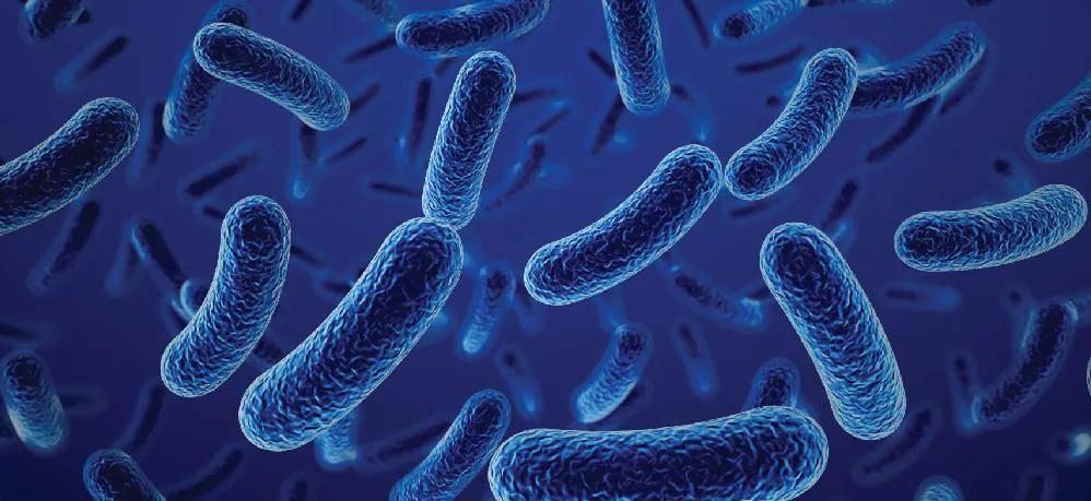 """2021上海益生菌展资讯-益生菌是肠道的""""守护神"""",出现5种"""