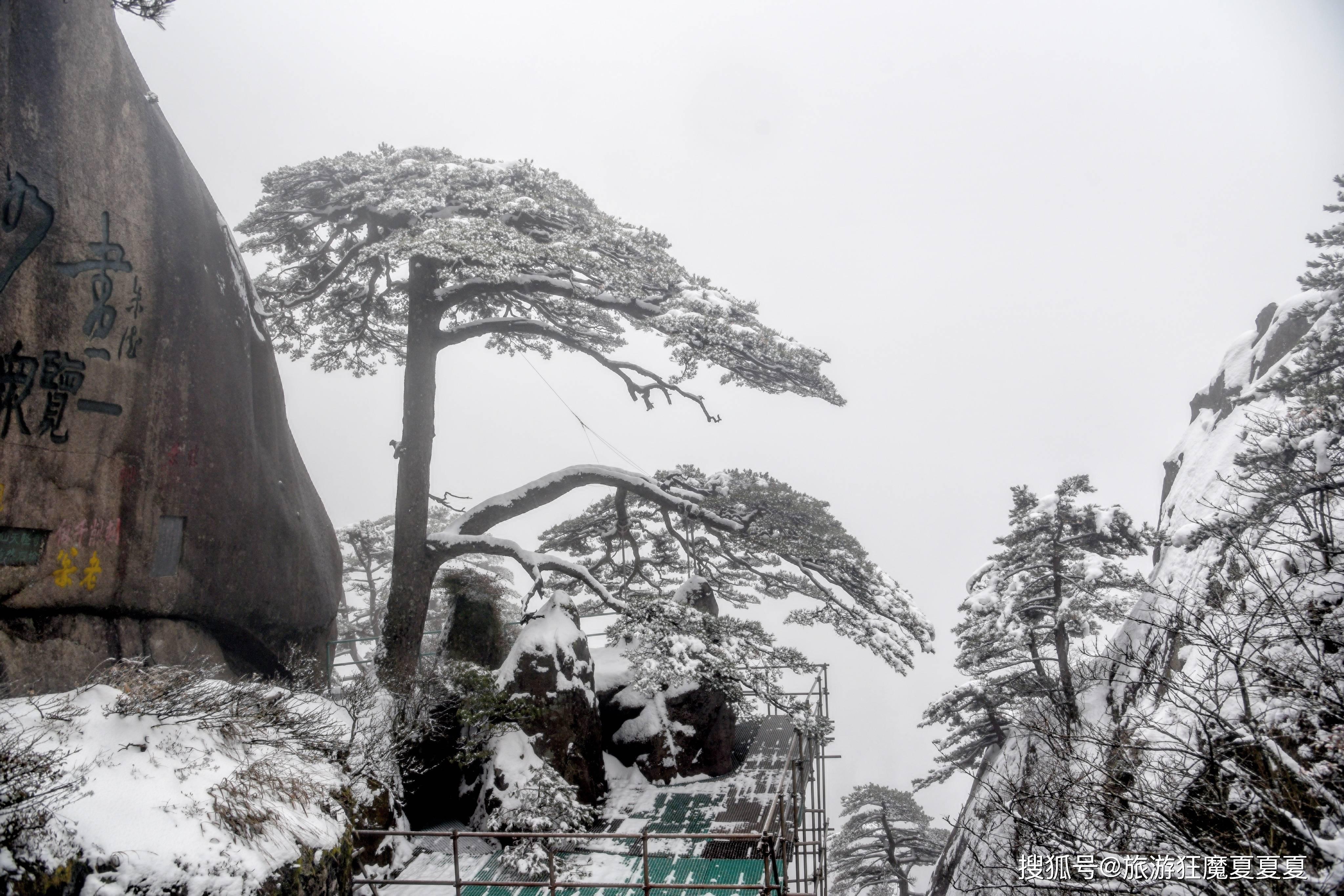 """一棵树竟专门配备了""""警卫""""?树龄已超千年,堪称中外友谊的象征"""