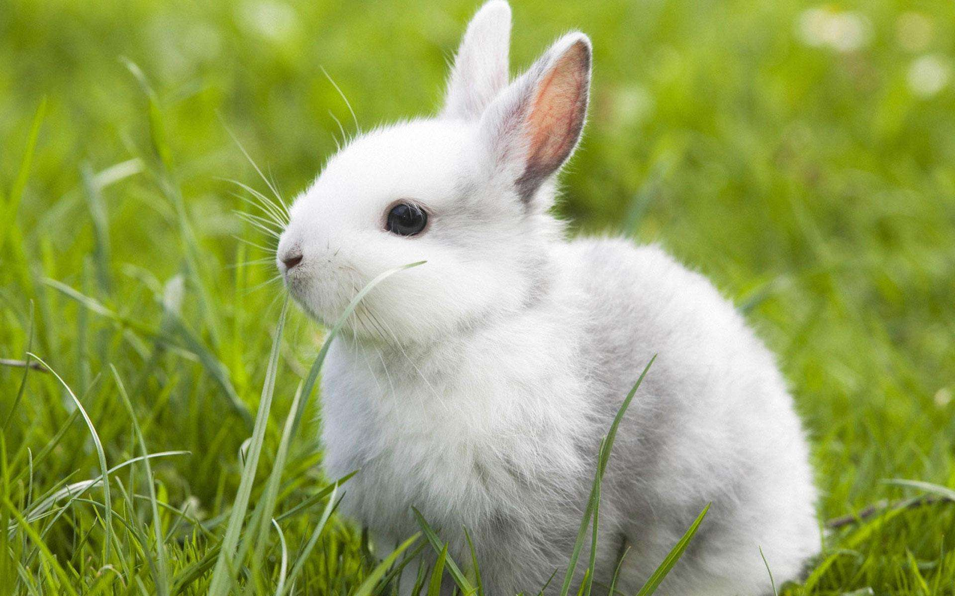 辉煌兔 帅兔社区我们的圈子