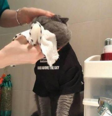 猫咪为什么一直洗脸图片
