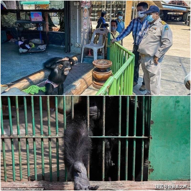 饿坏了?泰国动物园解封重开消瘦动物狂乞食,引人担忧!