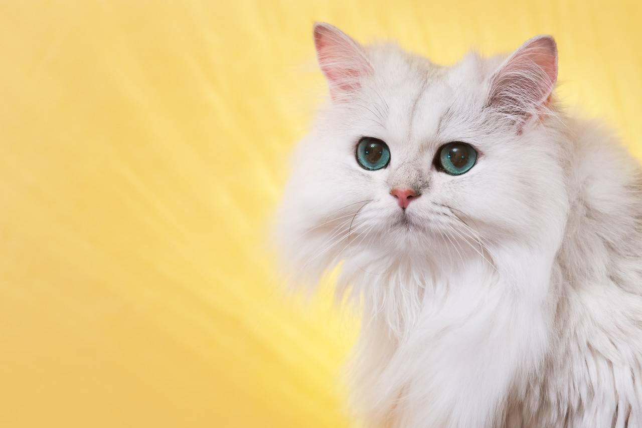 小猫咪太顽皮怎么办图片